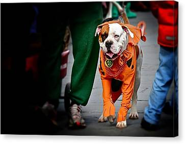 Canvas Print featuring the photograph Bulldog In Orange Costume by Jim Albritton