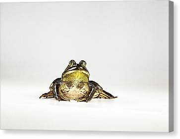 Canvas Print featuring the photograph Bullfrog by John Crothers