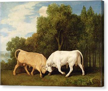 Bulls Fighting Canvas Print by George Stubbs