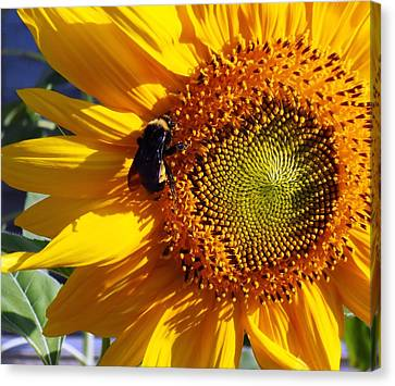 Canvas Print featuring the photograph Bumble Bee And Sunshine by Lynnette Johns