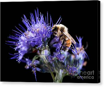 Bumble Bee On Blue Flower Canvas Print