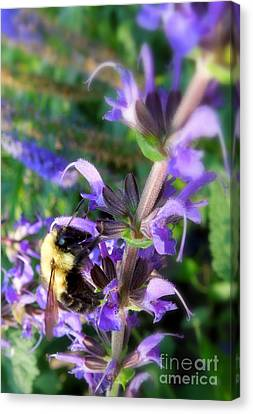 Bumble Bee On Flower Canvas Print by Renee Trenholm