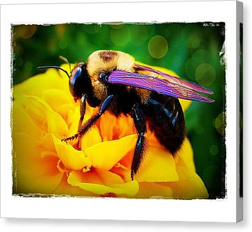 Bumblebee With Bokeh Canvas Print by Judi Bagwell