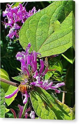 Bumbling Flora Canvas Print