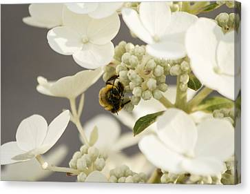 Bunblebee Hiding Canvas Print
