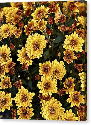Bunch Of Flowers Canvas Print by Malania Hammer