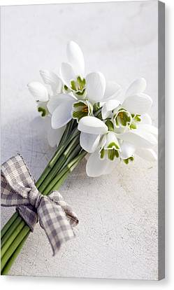 Bunch Of Snowdrops (galanthus Nivalis) With Purple Ribbon Canvas Print by Juliette Wade