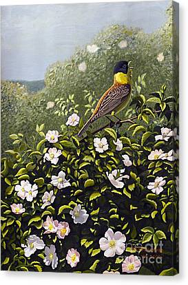 Bunting And Wild Roses Canvas Print