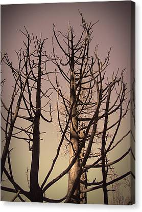 Burned Trees 3 Canvas Print by Naxart Studio