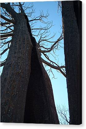 Burned Trees 7 Canvas Print by Naxart Studio
