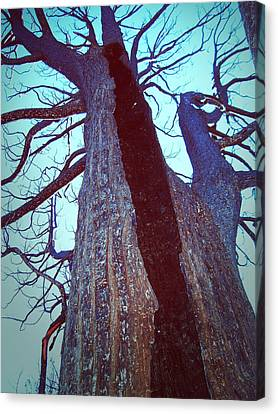 Burned Trees 8 Canvas Print by Naxart Studio