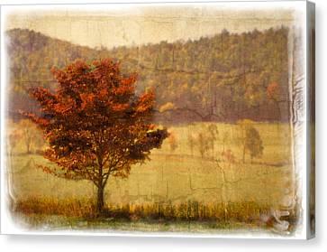 Burning Bush Canvas Print by Debra and Dave Vanderlaan