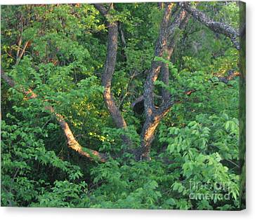 Canvas Print featuring the photograph Burnt Daylight by Mark Robbins