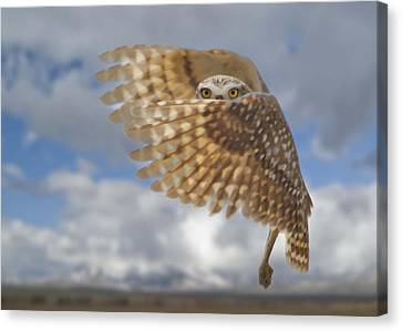 Burrowing Owl Liftoff Canvas Print