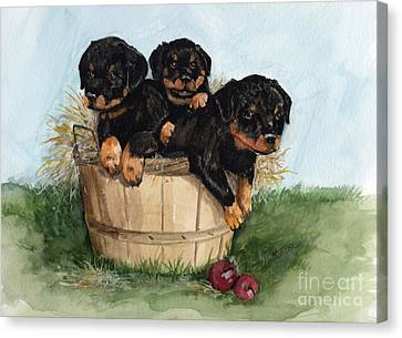 Canvas Print featuring the painting Bushel Of Rotty Pups  by Nancy Patterson