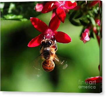Busy As A Bee Canvas Print by Theresa Willingham