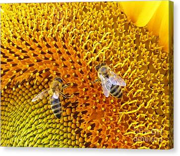 Busy Bees Canvas Print by AmaS Art