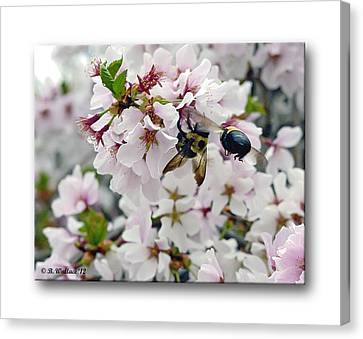 Busy Bees Canvas Print by Brian Wallace