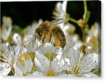 Busy Busy Bee Canvas Print