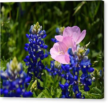 Canvas Print featuring the photograph Butter Blue by Lynnette Johns