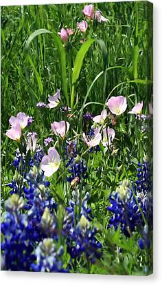Canvas Print featuring the photograph Buttercups by Lynnette Johns