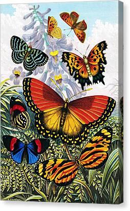 Butterflies, Artwork Canvas Print by Sheila Terry
