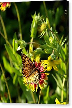Butterfly And Blankets I Canvas Print by James Granberry