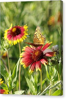 Butterfly And Blankets IIi Canvas Print by James Granberry