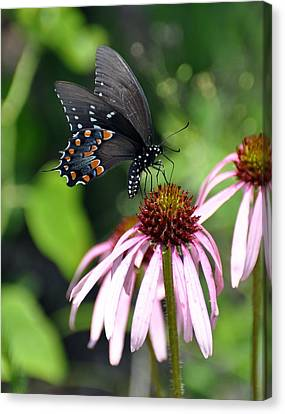 Butterfly And Coine Flower Canvas Print by Marty Koch