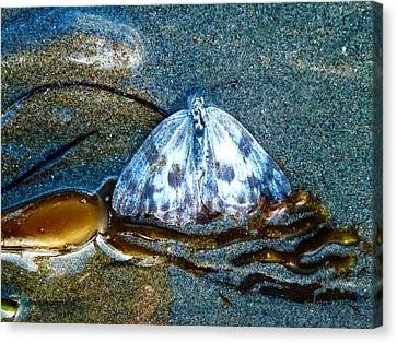 Butterfly And Kelp Canvas Print