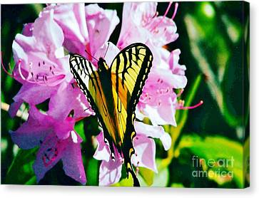 Butterfly And Rhododenren Canvas Print by Judy Via-Wolff