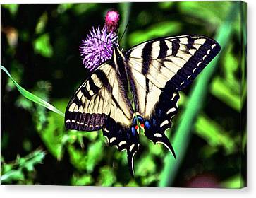 Butterfly And Thistle Canvas Print by Don Mann