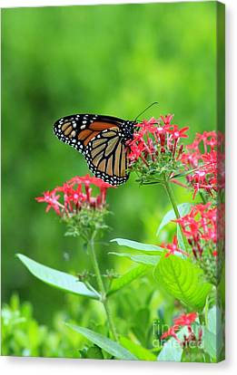Canvas Print featuring the photograph Butterfly Beauty by Laurinda Bowling
