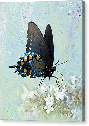 Butterfly Candy Canvas Print by Betty LaRue