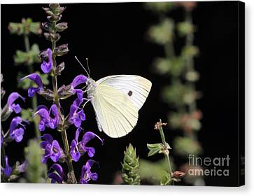 Canvas Print featuring the photograph Butterfly by Denise Pohl