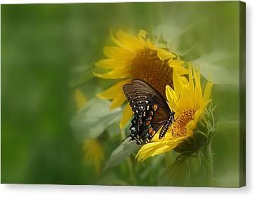 Butterfly Dream Canvas Print by David Gunter