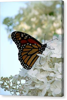 Butterfly Dreams II Canvas Print by Terry Eve Tanner