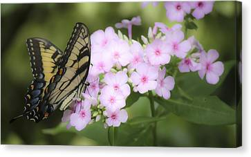 Butterfly Dreams Canvas Print by Teresa Mucha