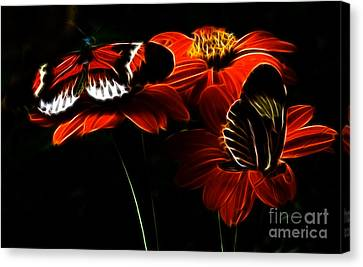 Butterfly Duet Canvas Print by Darleen Stry