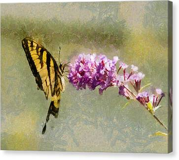 Butterfly Feast Canvas Print