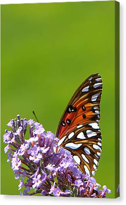 Canvas Print featuring the photograph Butterfly From Below by George Bostian