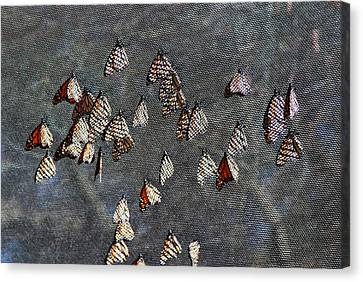 Canvas Print featuring the photograph Butterfly Gathering by Tam Ryan