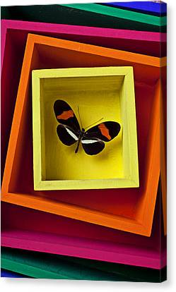 Container Canvas Print - Butterfly In Box by Garry Gay