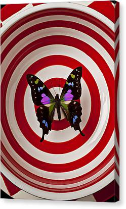 Butterfly In Circle Bowl Canvas Print by Garry Gay