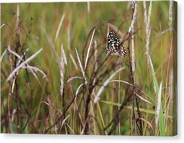 Canvas Print featuring the photograph Butterfly In Flight by Fotosas Photography