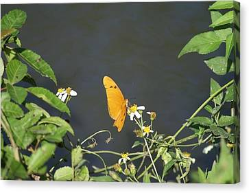 Canvas Print featuring the photograph Butterfly by Jerry Cahill