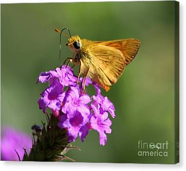 Butterfly Kisses Canvas Print by Patrick Witz