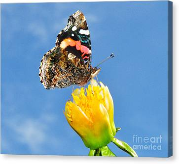 Butterfly N Flower Canvas Print