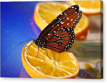 Canvas Print featuring the photograph Butterfly Nectar by Tam Ryan