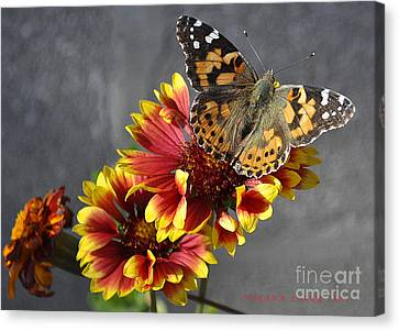Canvas Print featuring the photograph Butterfly On A Gaillardia by Verana Stark